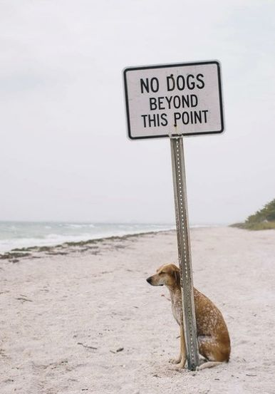 Dog and beach 5